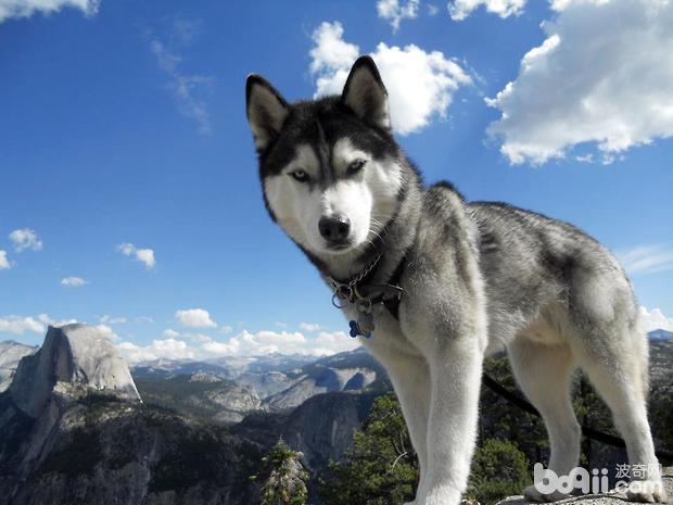 商品性狗粮的3种类型:干型、半湿型和罐装狗粮-狗狗品种